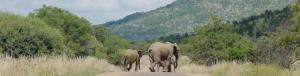 south africa zimbabwe lake arbor travel-037 elephants