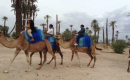 Camel Rides Lake Arbor Travel