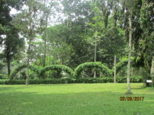 Aburi Botanical Gardens Ghana Feb 2017 Lake Arbor Travel-11