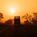 African Safari 2020